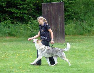 Dojan von der Wolfsranch mit Besitzerin Nadine Tilz