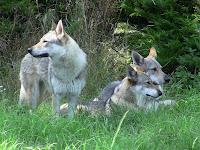 Unsere TWH auf der Wolfsranch