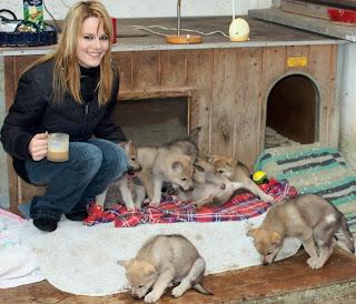 5 Wochen alte Wolfshundwelpen mit Besucherin Patricia