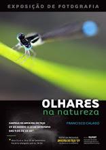 OLHARES NA NATUREZA - AMIEIRA DO TEJO