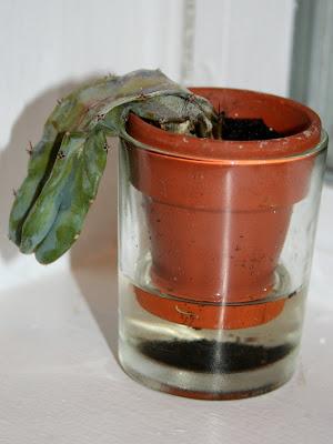 http://2.bp.blogspot.com/_c-FRuQYOFCs/SbR2Zx8oHvI/AAAAAAAACSI/5aG7YCio52g/s400/dead+cactus+2.jpg