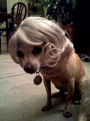 Animals Wearing Wigs Animals wearing wigs funny