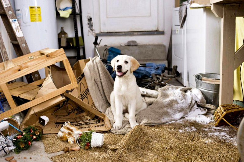 marley and me puppy. Marley and Me: SUMMARY OF THE