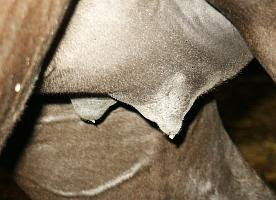 Mare Waxing Picture