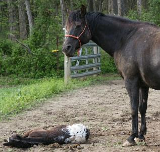 New foal is born