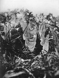 Cottingley wood fairies
