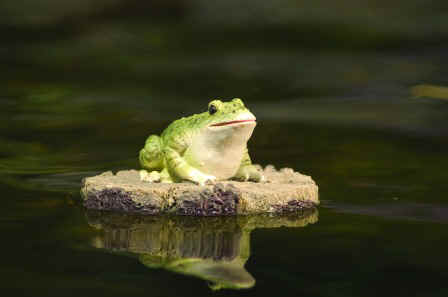 99455_Floating_Frog_on_a_Log_In_Use_Image.jpg