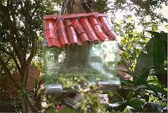 Moradia intinerante para pássaros - portas aberta !