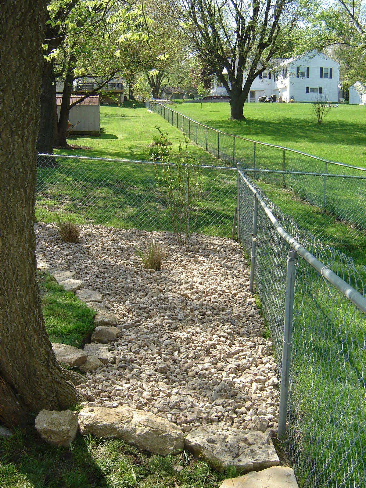 how to maintain a nice yard despite your dog u0027s best attempt to