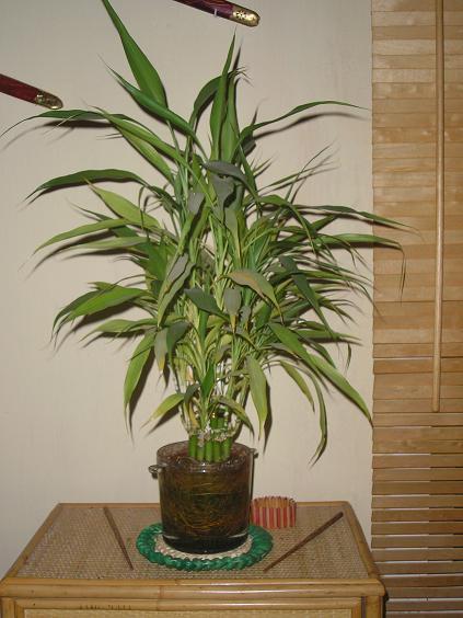 El jardin de pepa plantas de interior y cactus for Plantas en agua interior