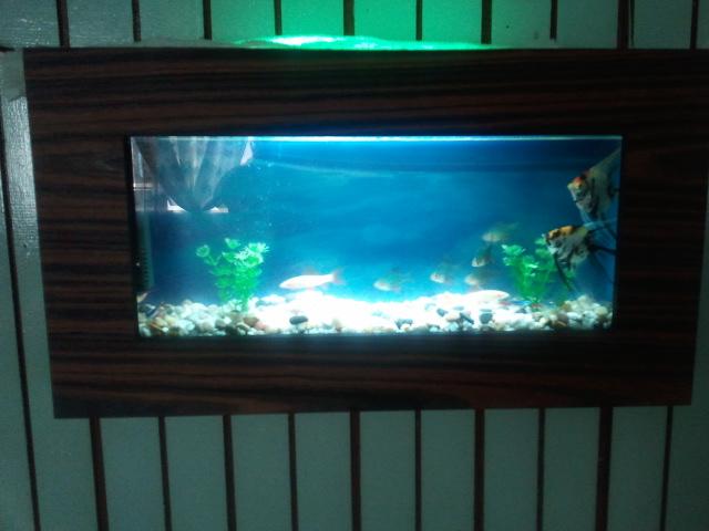 Wall Aquarium At Home Customer 39 S House Mounted Wall