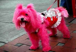 Latest Fashion Trends For Dog