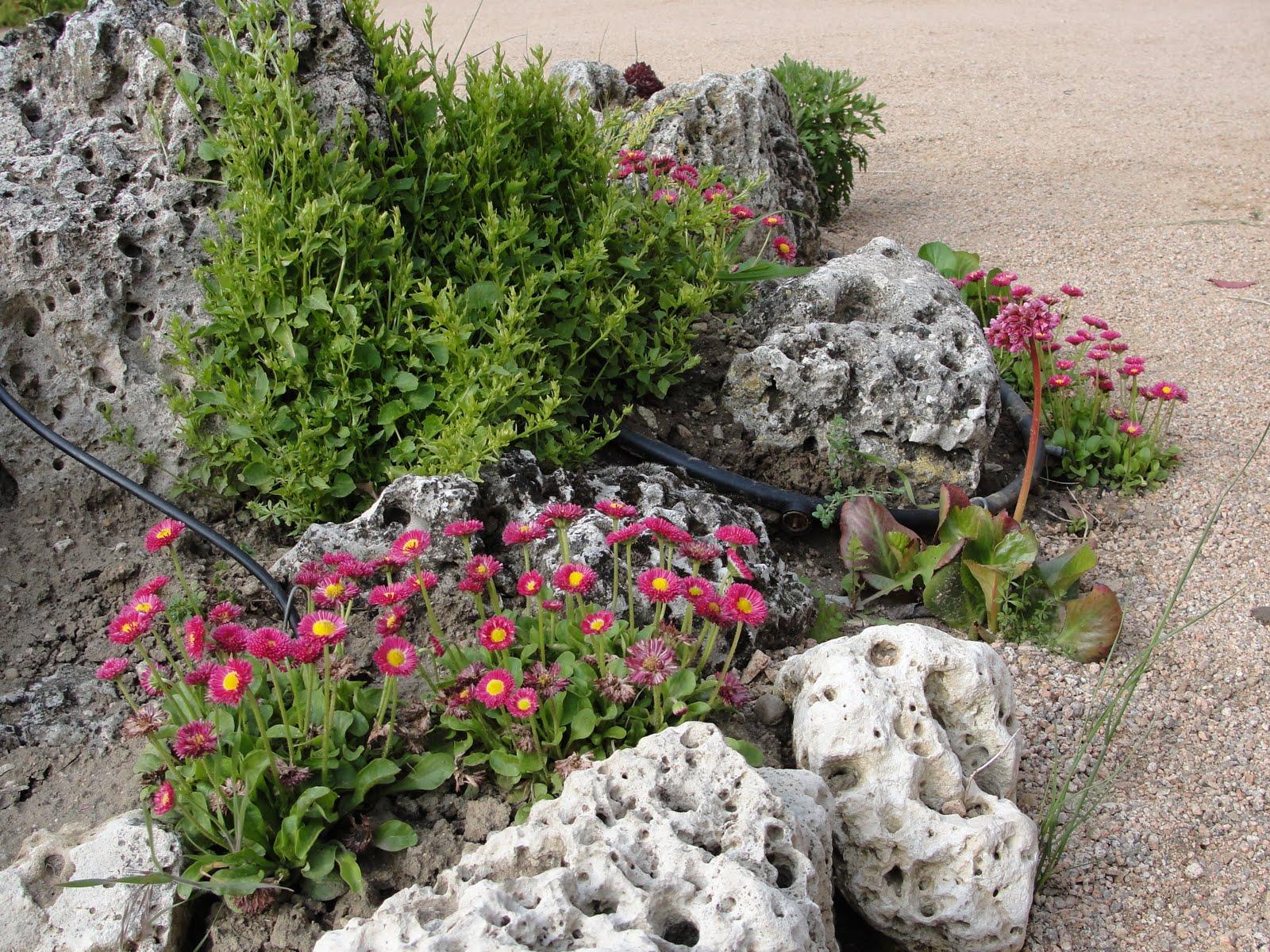 Jardiner a plantae rocalla for Plantas para rocallas
