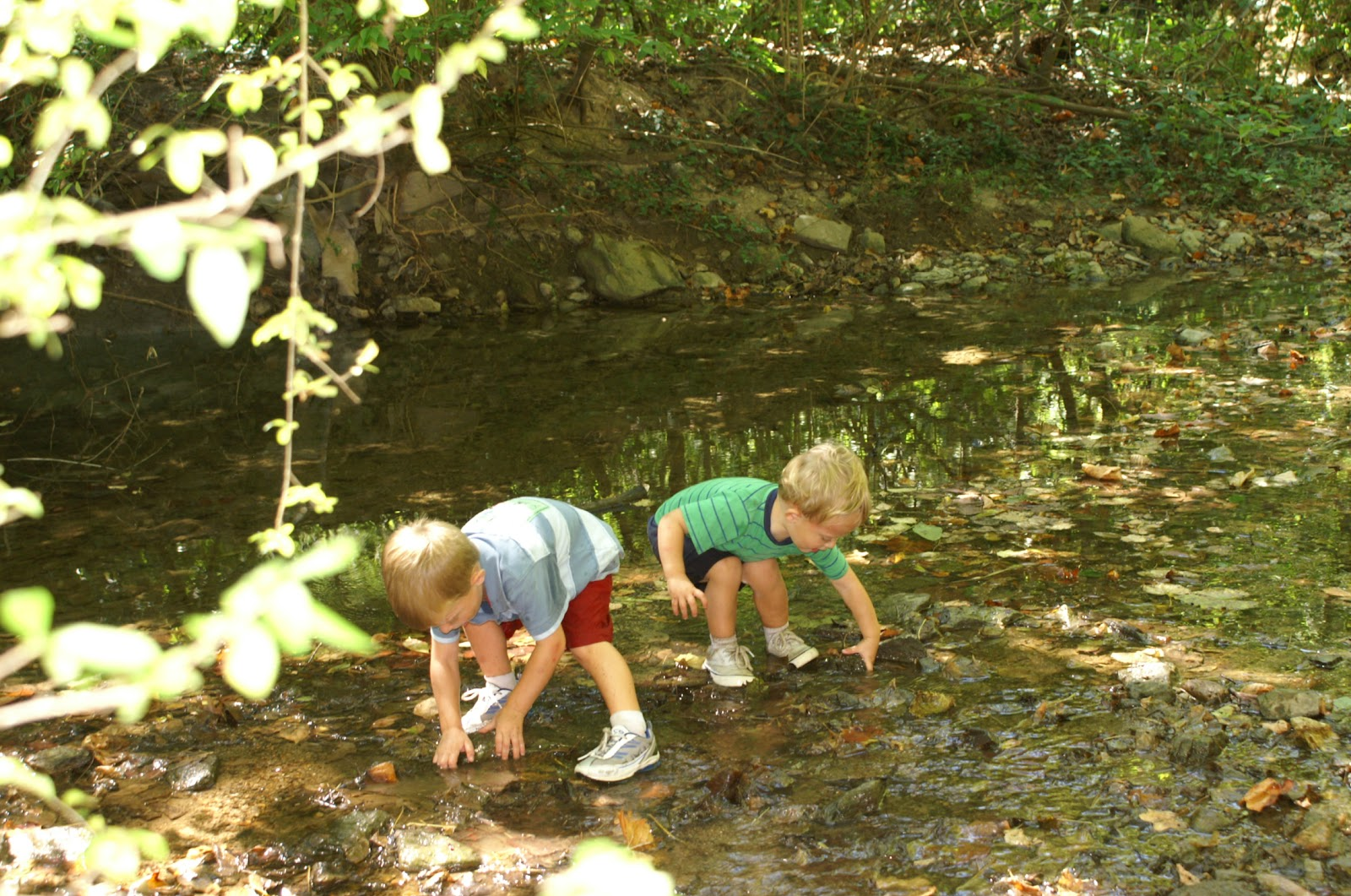 Two Tykes on a Hike: Trail Tale: Dogwood Park, September 2010