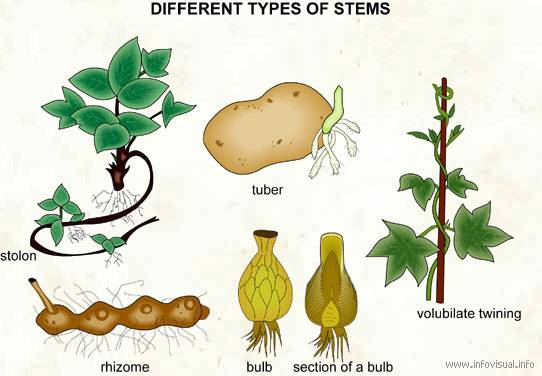 Biology: Introduction to Life: Supplement - Stem