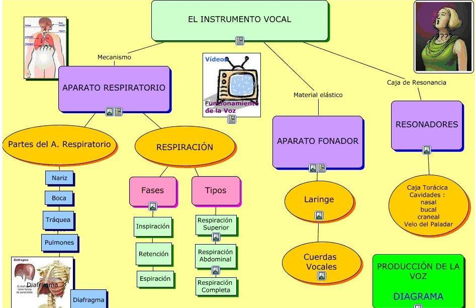Bonito Diagrama De La Caja Torácica Humana Adorno - Anatomía de Las ...
