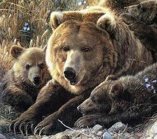 Save Wild animals