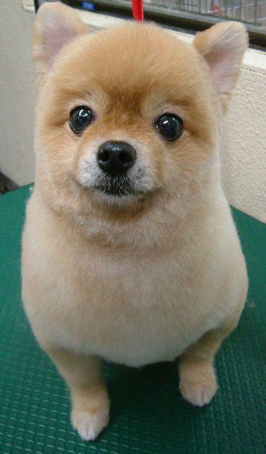Perro esponja