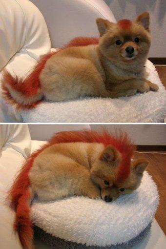 Perro raro