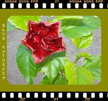 Do meu jardim...