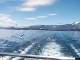 Gulls in Nahuel Huapi - Bariloche - Argentina