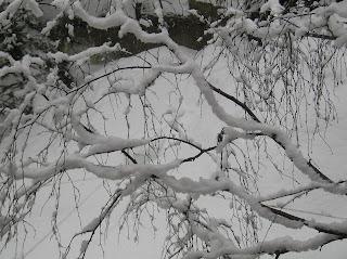 Snow - Tree - Bariloche - Argentina