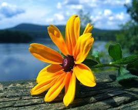 «Dai diamanti non nasce niente, dal letame nascono i fiori.»