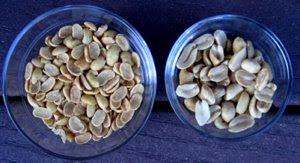 soy nuts vs. peanuts