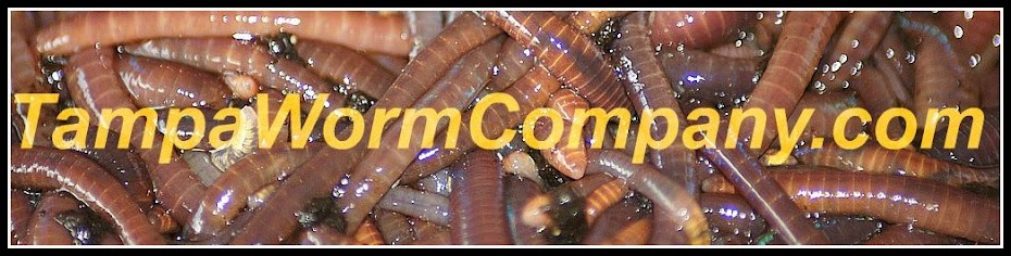 Tampa Worm Company - Vermicomposting - Vermiculture - Vermicast