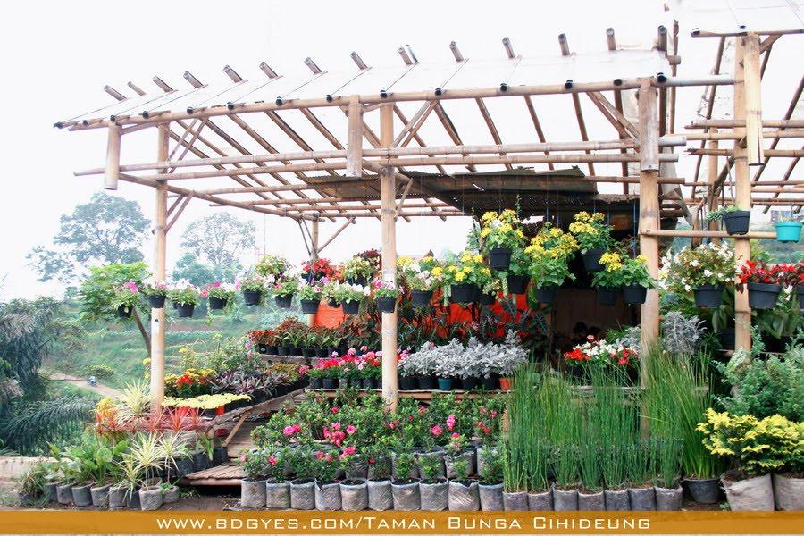cihideung flower garden terletak di desa cihideung kecamatan ...