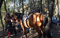 cheval aux pieds des blocs