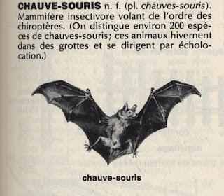 article chauve-souris du petit larousse illustré 1981 avec gravure