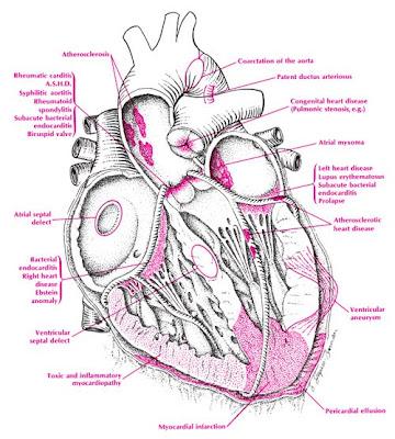 Veins And Arteries Of The Body. veins body sitesarteries