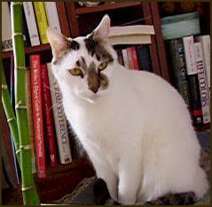 Sam the Bookshelf Cat