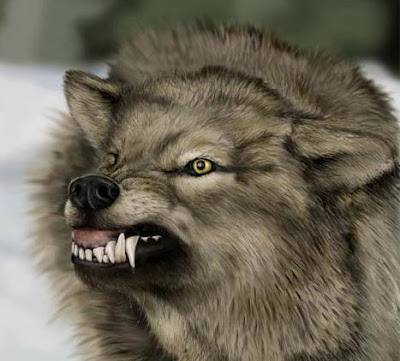 Evil Wolf Face For you see  I am not a wolf