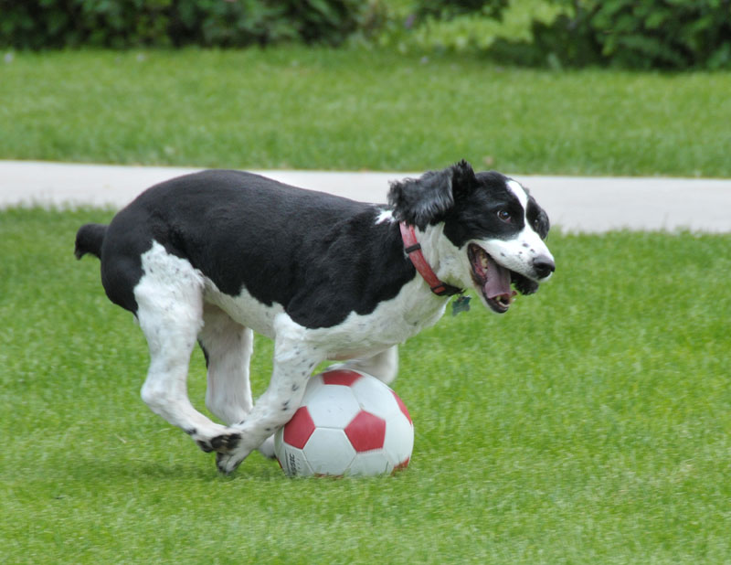 Happy Friday Dog Happy Soccer Dog