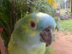 Chiquita, my parrot