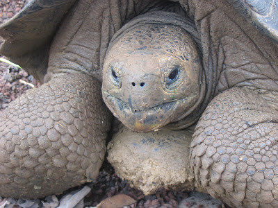 Lonesome George Galapagos Islands