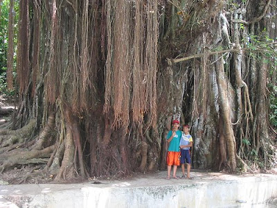 Balete Tree Siquijor Island