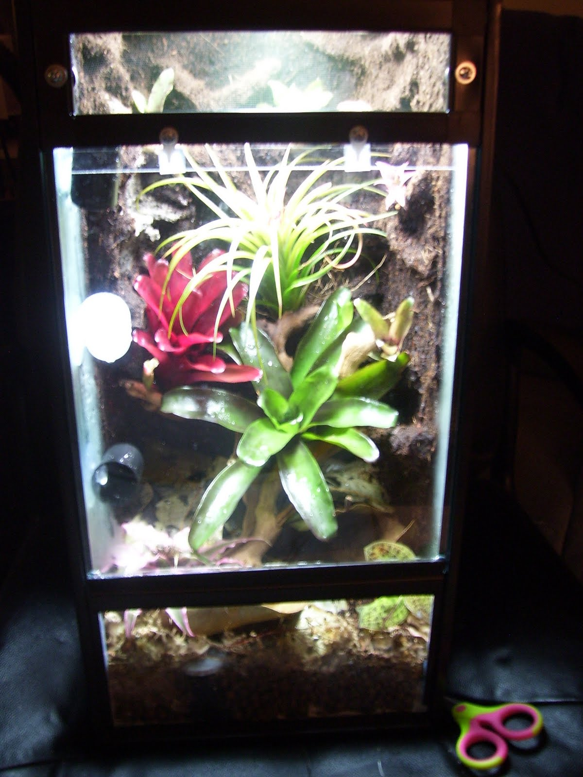 The Ten Gallon Vivarium Thread: Pictures! - Dendroboard 10 Gallon Vivarium