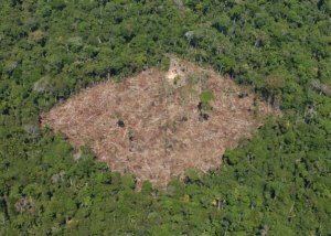 Denunciar crimes na Amazônia