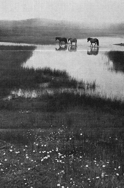 [sable+horses]