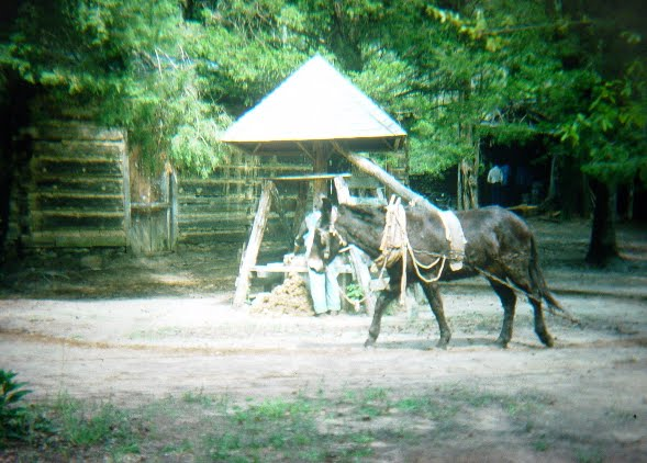[Mule.jpg]