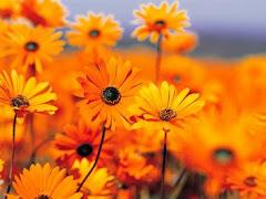 Bunga Tepian