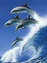 Lumba-Lumba Laut
