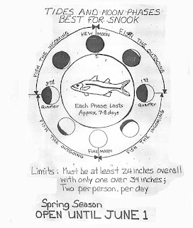 Catch fish by fishing how to catch snook for Fishing moon phase