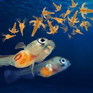 Como cultivar art mias salinas b nny bettas b nny for Comida viva para peces