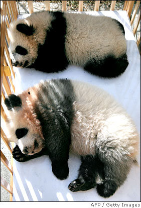 [pandas8.jpg]