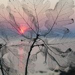 Se transparenta la vida y siempre hay una luz