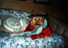 Fave Dog